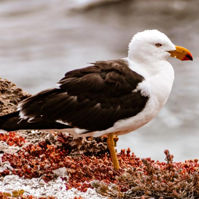 """Sea Bird"" stock image"