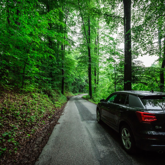 """Car in the woods"" stock image"