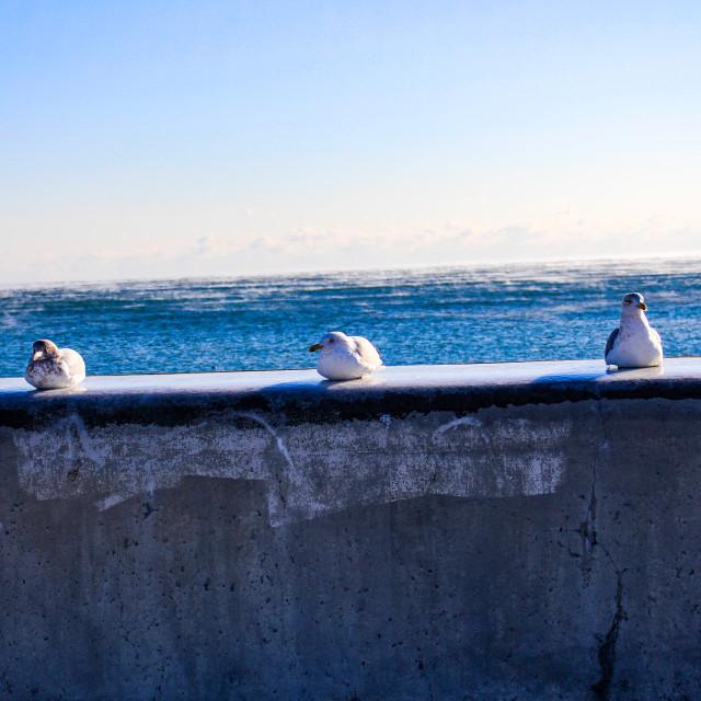 """3 Little Gulls"" stock image"