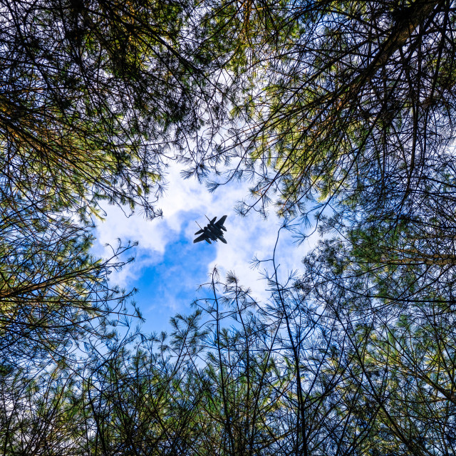 """""""F/A-18 Hornet over Thetford Forest Treetops, High Lodge, Brandon."""" stock image"""