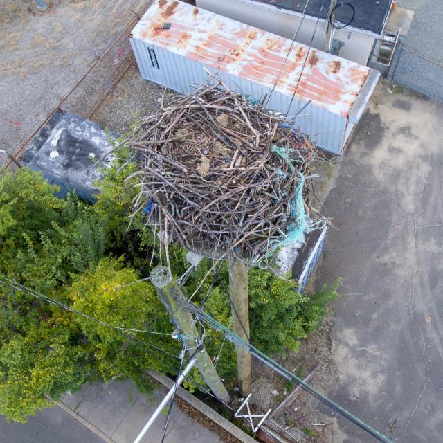 """Osprey nest from above"" stock image"