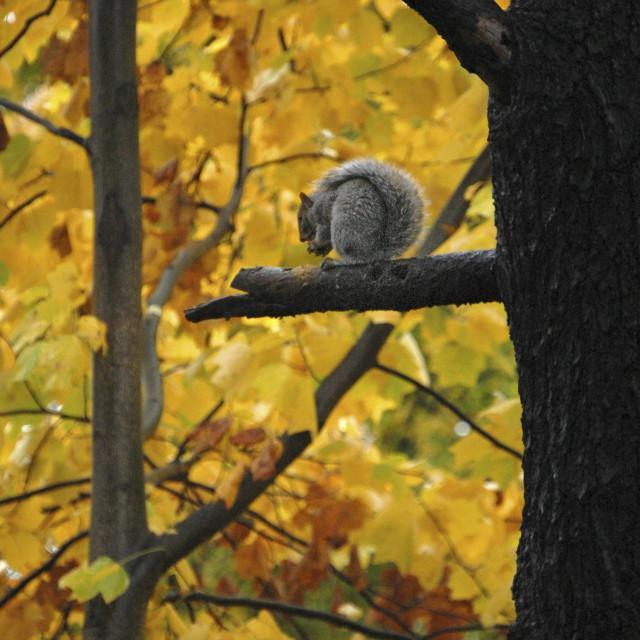 """""""Aurumn Squirrel"""" stock image"""
