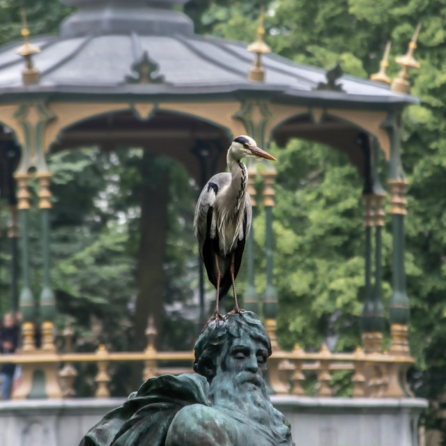 """""""Great Blue Heron on fountain statue"""" stock image"""