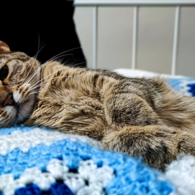 """""""Donna - Tabby cat"""" stock image"""