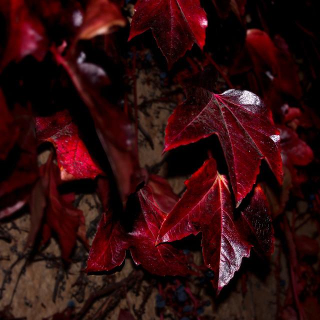 """Dark leaves colours."" stock image"