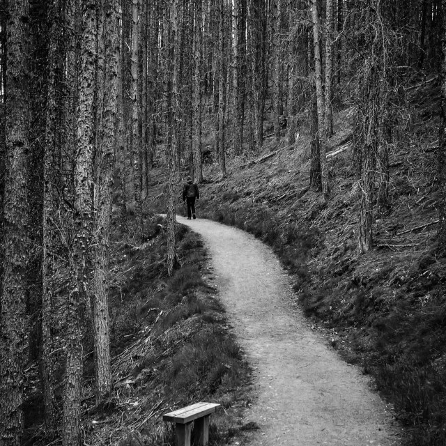 """""""The Lonely Path"""" stock image"""