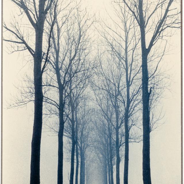 """""""Nesserlaan in mist"""" stock image"""
