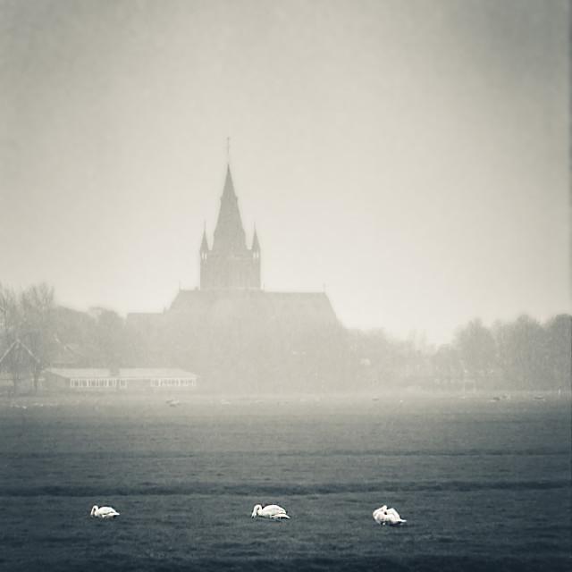"""Nes, church, swans, mist"" stock image"
