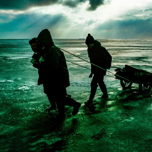 """""""Winter auf Hallig Gröde im Nordfriesischem Wattenmeer"""" stock image"""