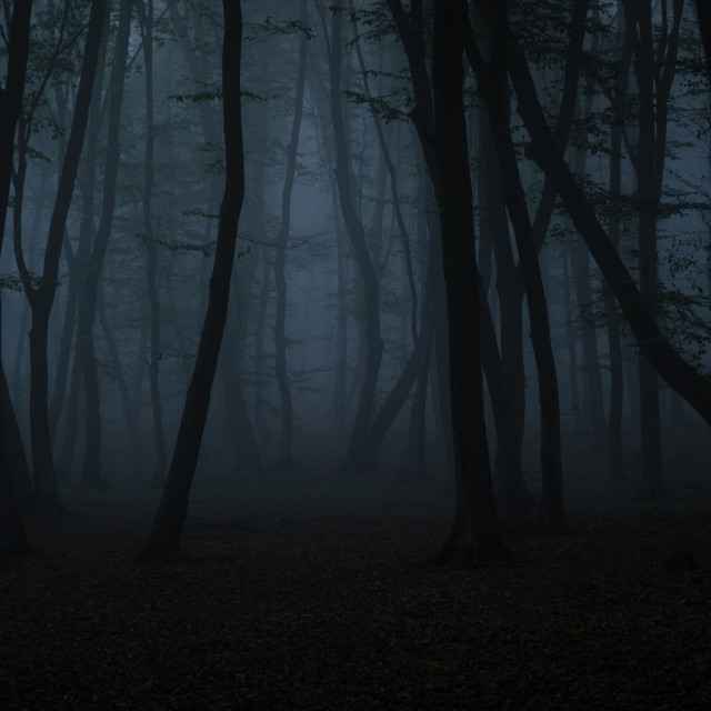"""""""Fog gives birth to silence"""" stock image"""
