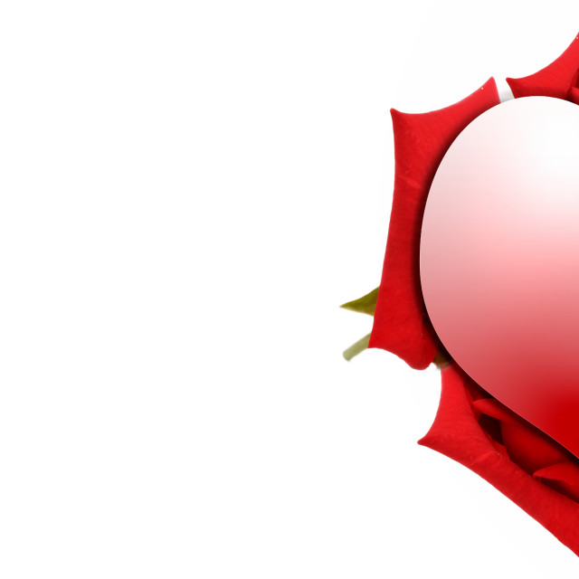 """""""heart-shaped on petals of red roses in panoramic view"""" stock image"""