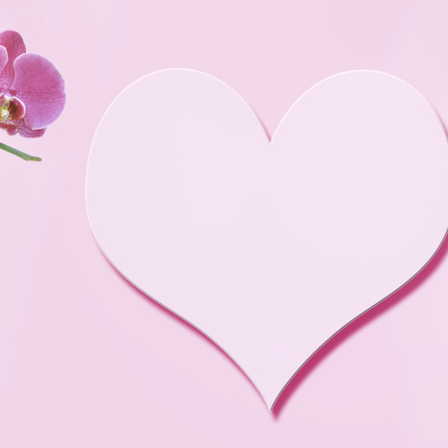 """""""flowers on pink background in panoramic view with in the center an heart"""" stock image"""