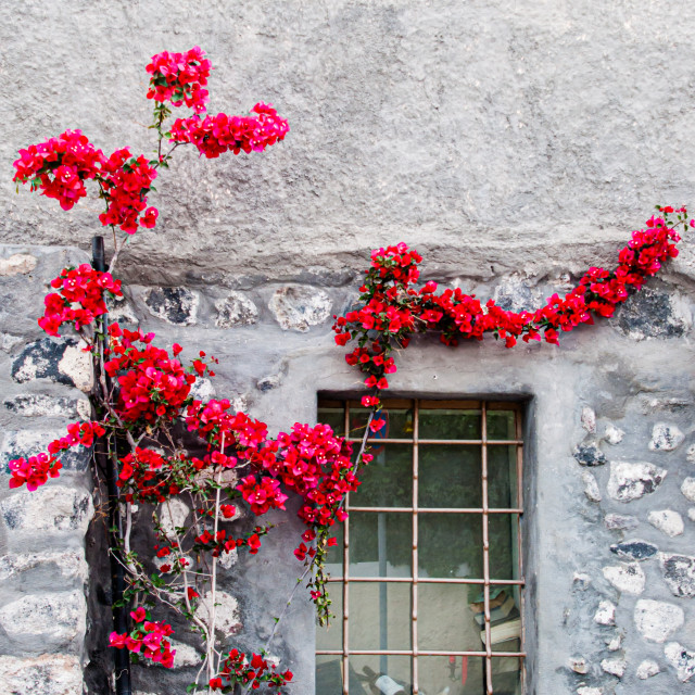 """""""Flowers on the Wall"""" stock image"""