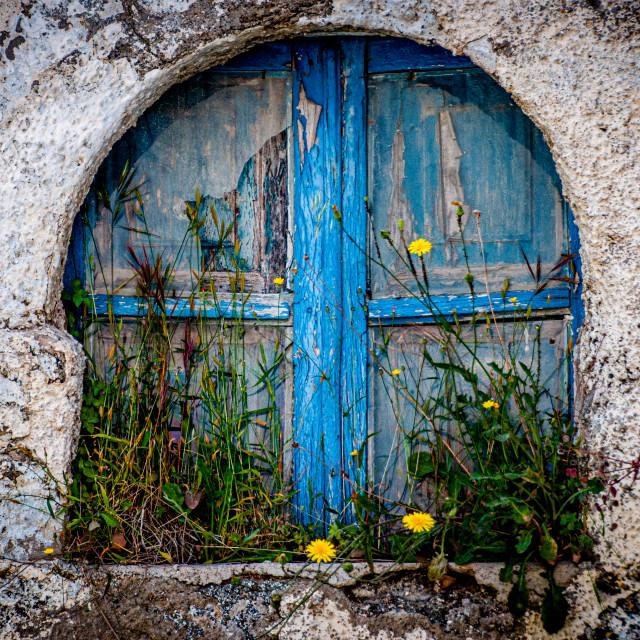 """Blue Window Yellow Weeds"" stock image"
