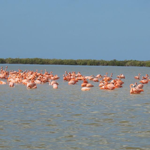 """Flamingo Flamboyance"" stock image"