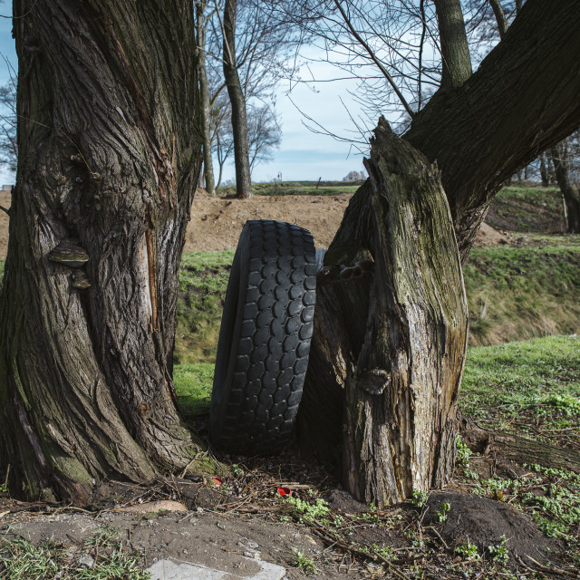"""""""old tire left in the forest, garbage"""" stock image"""