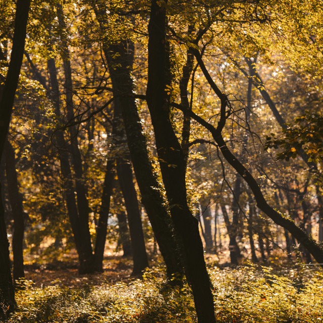 """park in autumn light"" stock image"