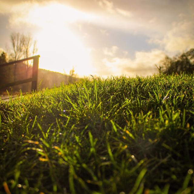 """Sunny blade of grass"" stock image"