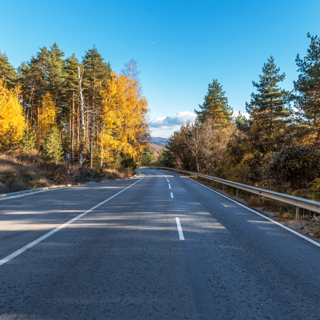 """""""Asphalt road with beautiful trees on the sides in autumn."""" stock image"""