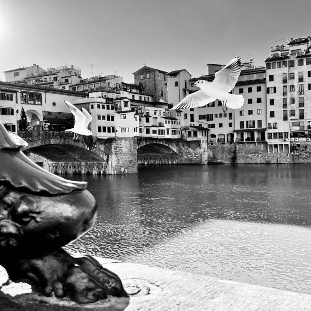 """""""Ponte Vecchio view with seagulls, Florence."""" stock image"""