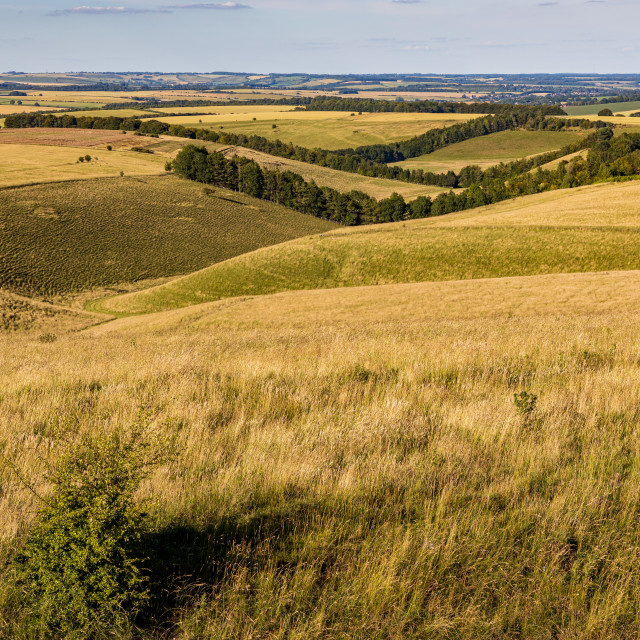 """""""View from Tan Hill, Pewsey Downs"""" stock image"""