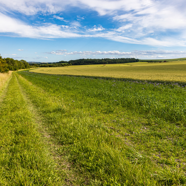 """""""Field-edge footpath, Vale of Pewsey"""" stock image"""