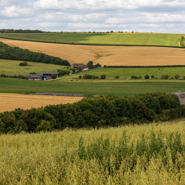"""Marlborough Downs farm"" stock image"