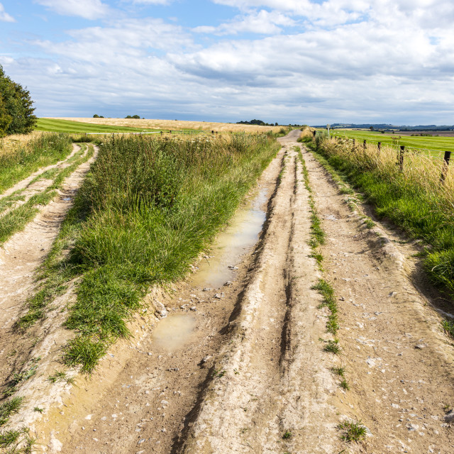 """""""Meeting of the byways, Marlborough Downs"""" stock image"""