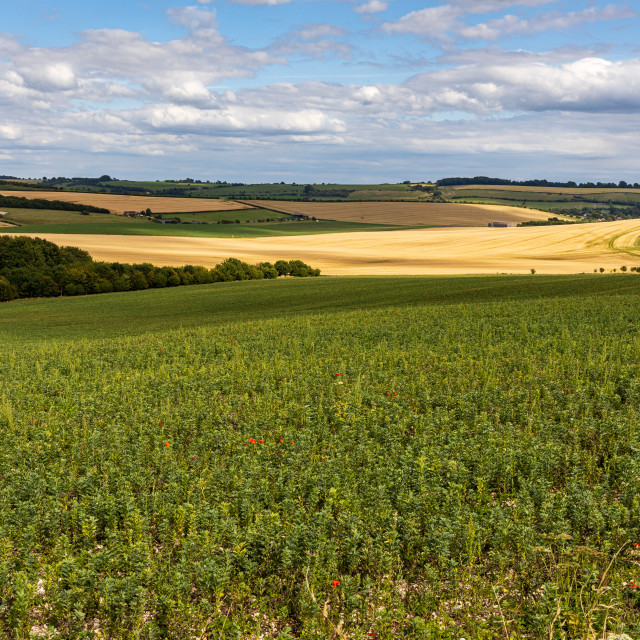 """Marlborough Downs landscape"" stock image"