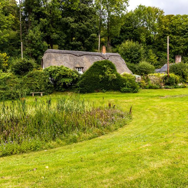 """""""Tollard Royal cottage"""" stock image"""