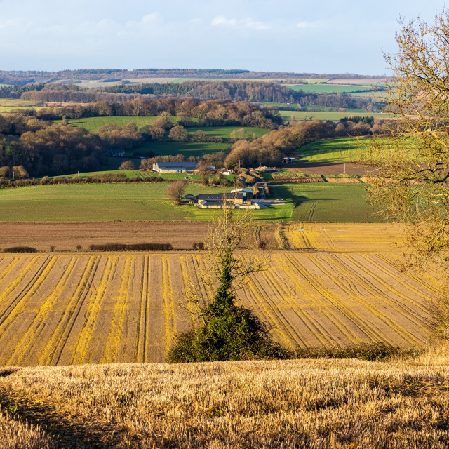 """""""Lines in the landscape, Wiltshire"""" stock image"""