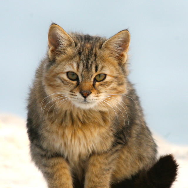 """Baby Cat"" stock image"