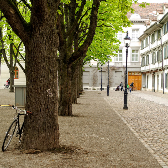 """""""Bike Against a Tree"""" stock image"""