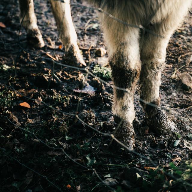 """""""Donkey legs"""" stock image"""