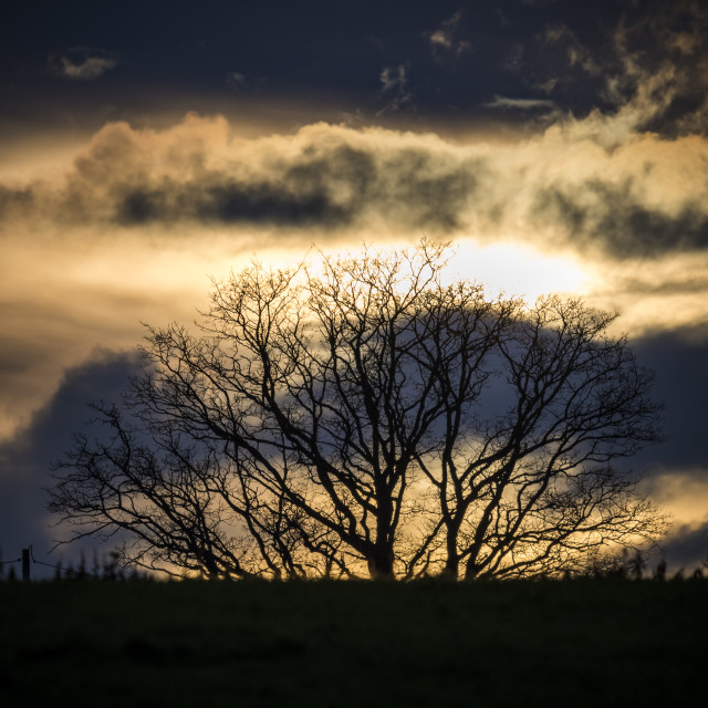"""""""Dramatic sky over silhouetted tree in English countryside"""" stock image"""