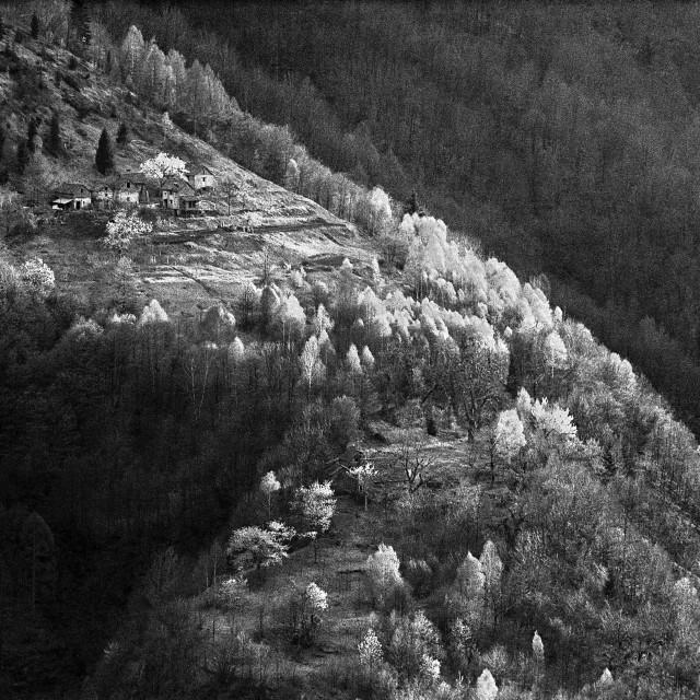 """Mountainside farm, Valle Onsernone"" stock image"