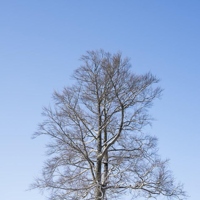"""Tree awesomeness"" stock image"