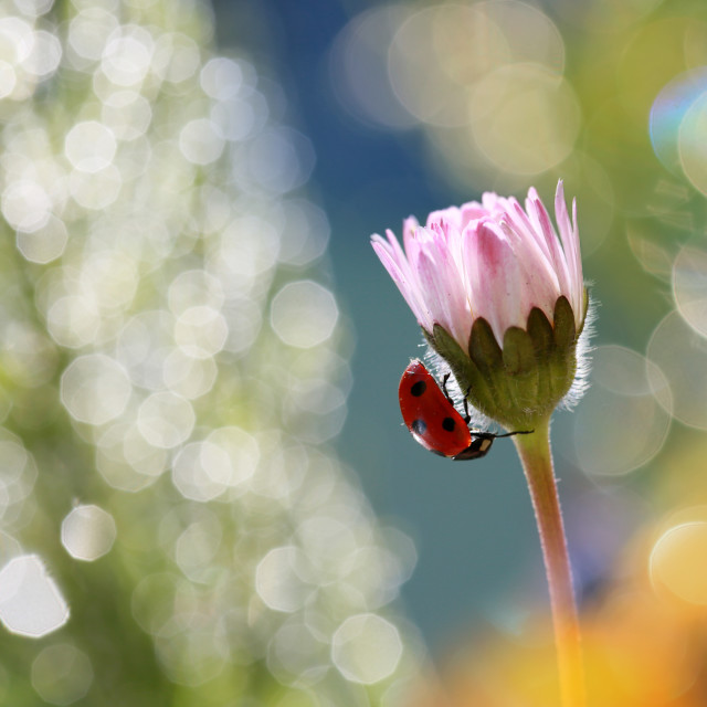 """Little red ladybug from my garden"" stock image"