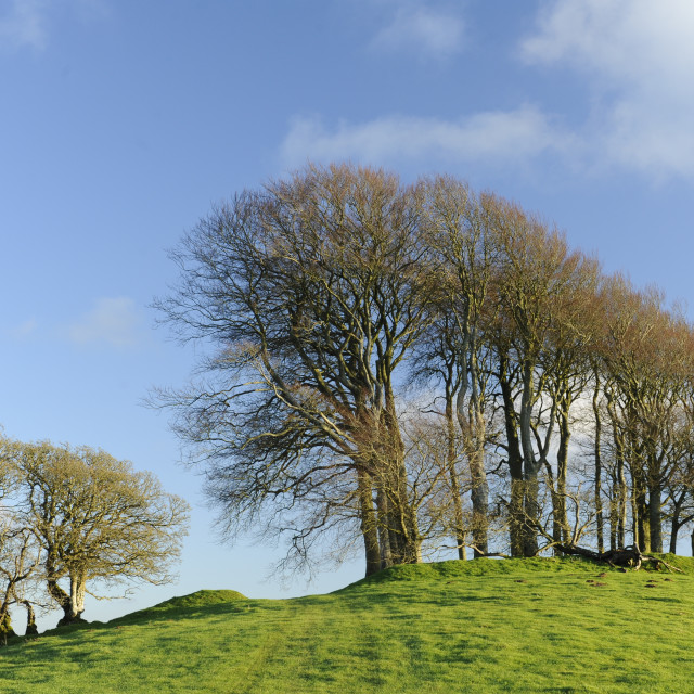 """Gerrard's Hill, Dorset"" stock image"