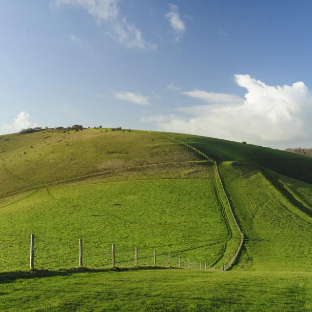 """""""Melbury Hill, Compton Abbas, Dorset"""" stock image"""