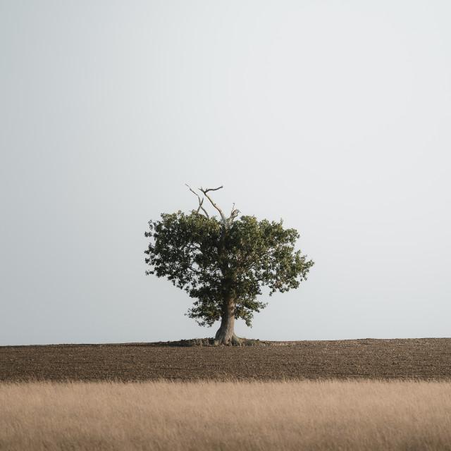 """""""The Heart Tree"""" stock image"""