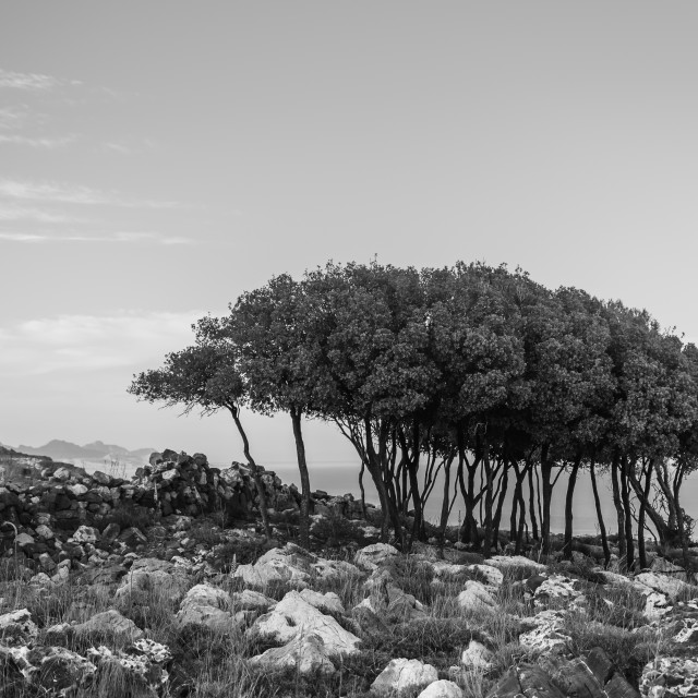 """""""""""Sisters"""" - A group of trees on rocky terrain"""" stock image"""