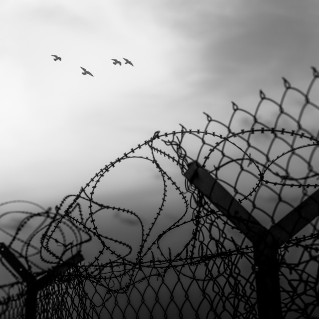 """""""""""Free Birds Fly"""" - Birds flying over a barbed wire fence"""" stock image"""