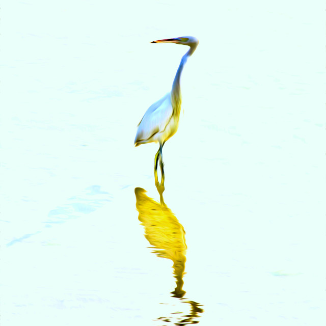 """The Heron Of Arabia"" stock image"