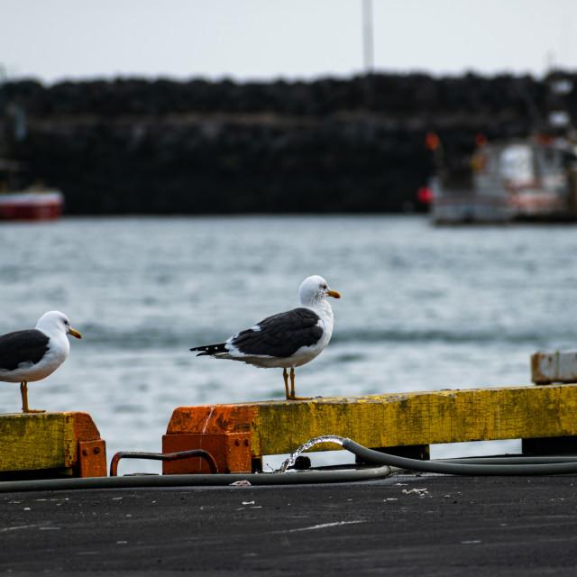 """Seagulls chilling"" stock image"