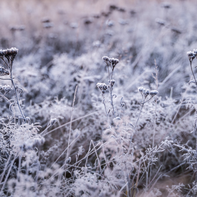 """""""Beauty of cold colors"""" stock image"""