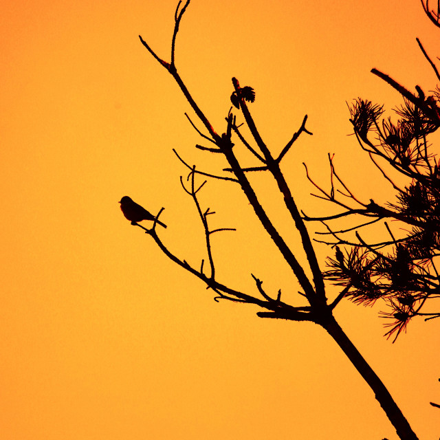 """""""Silhouette of Sparrow"""" stock image"""