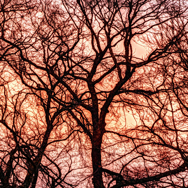 """""""Red Sky In the Morning"""" stock image"""