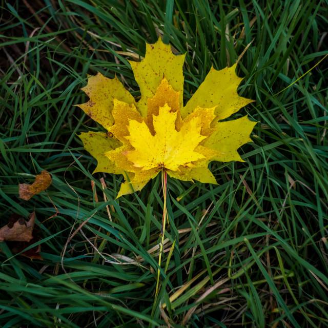 """""""Leaf in leaf"""" stock image"""