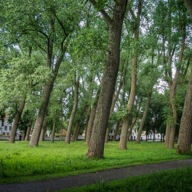 """Begijnhof courtyard meadow with windblown trees"" stock image"